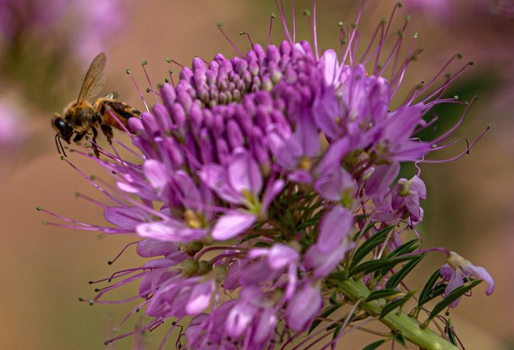 MAINPAGE 7 Plants That Will Keep Pests Out of Your Garden and 7 Plants That Will Attract Pollinators.jpg