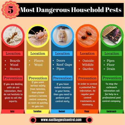 Top_5_Most_Dangerous_Household_Pests_Most_Dangerous_Household_Pests.jpg