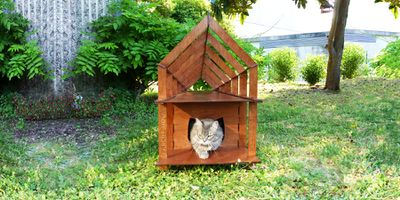 FabCat_House_03_sm.jpg